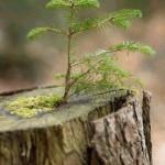 Texto motivacional sobre mudanças – Recomeçar