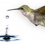 Estórias para motivar – O beija-flor idealista
