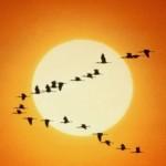 Texto motivacional – Os gansos