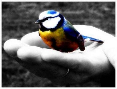 Texto Motivacional O Sábio E O Pássaro