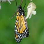 Texto motivacional – A borboleta no casulo