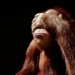 Texto motivacional – Os cinco macacos