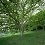 Texto motivacional – A árvore dos problemas