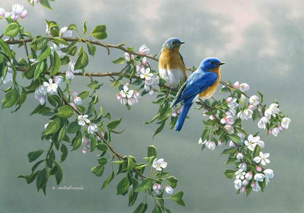 Texto Motivacional Os Pássaros Voam