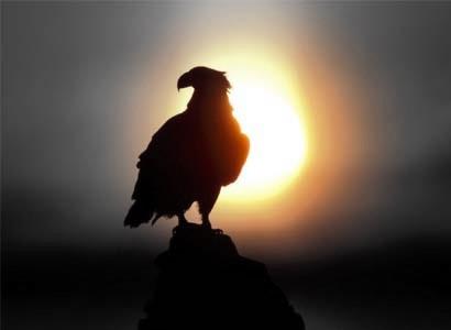 Texto Motivacional A águia E As Galinhas