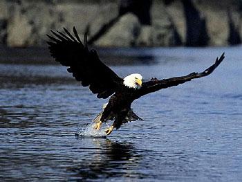 Texto Motivacional A águia