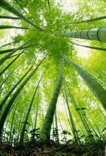 Texto Motivacional O Bambu Chinês