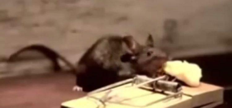 O Rato e a Ratoeira – Vídeo motivacional que é uma verdadeira lição de vida!